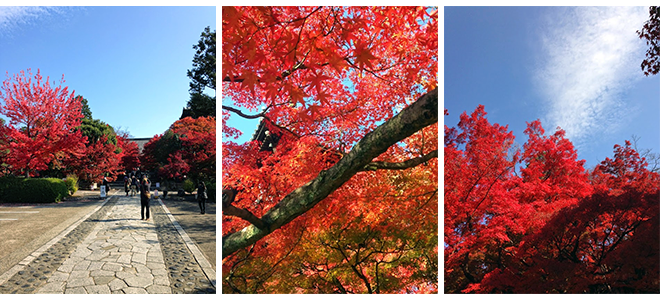 Kyoto's Colors: The Autumn Tints