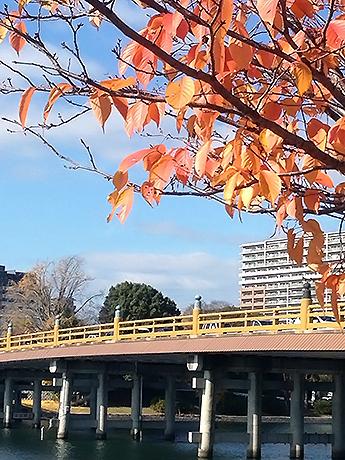 風景にとけこむ色の橋と瀬田川イルミネーション
