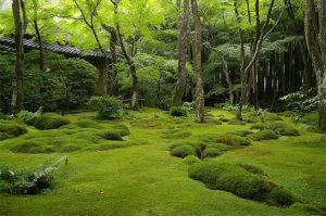 雨に濡れる苔の庭、緑色にひっそりとひっそりと