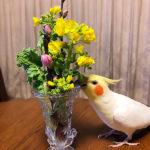 春の花もベース別に♪