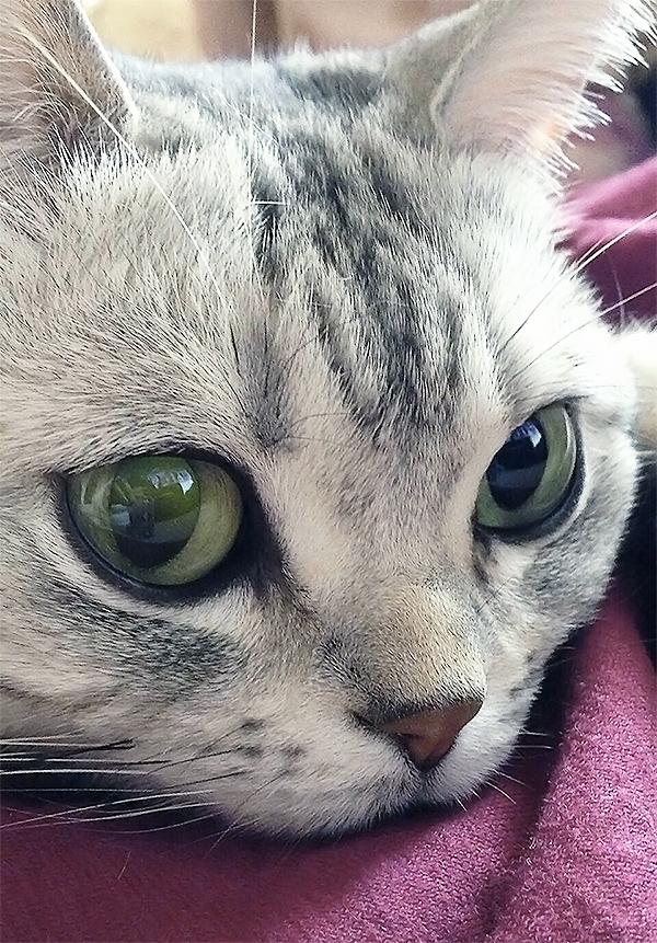 美人猫ちゃんはブルーベース