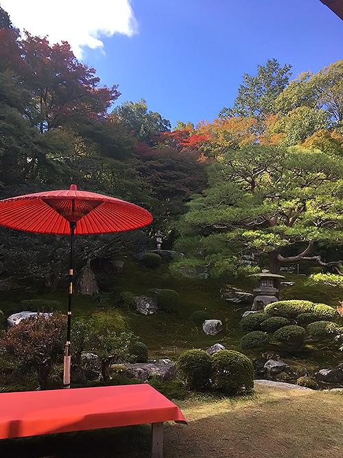イエローベースの赤を楽しむ秋の庭