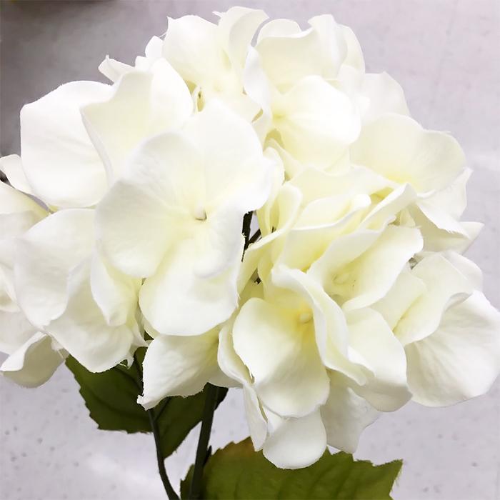 純粋無垢な白